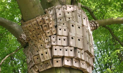 Bird-Boxes.jpg