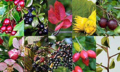 Edible-hedging.jpg