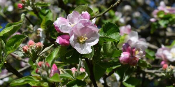 Blossom22.jpg