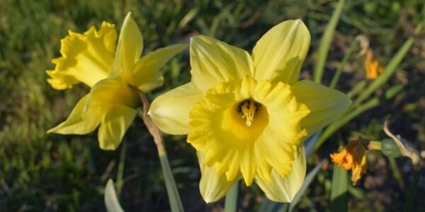 Blossom20.jpg
