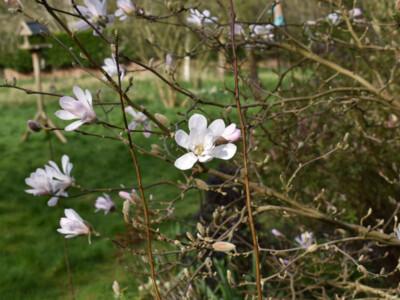 Orchard-21-3.jpg