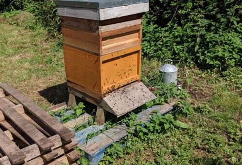 Beehive11.jpg
