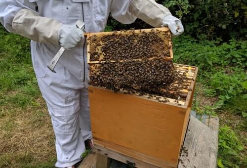 Beehive10.jpg