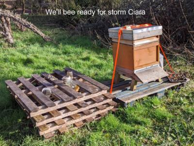 Bee-ready-Site.jpg