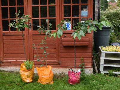 Donated-Trees.jpg