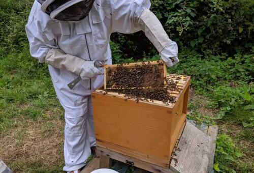 Beehive8.jpg