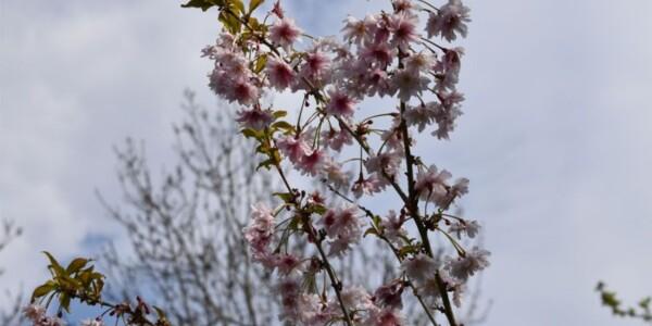 Blossom16.jpg