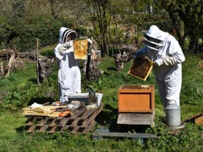 Bee-blog2.jpg