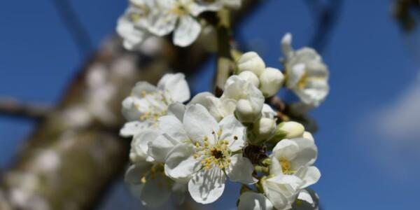 Blossom21.jpg