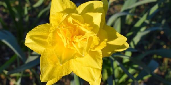 Blossom19.jpg