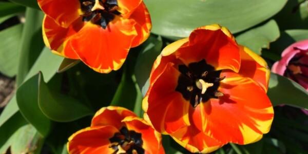 Blossom8.jpg