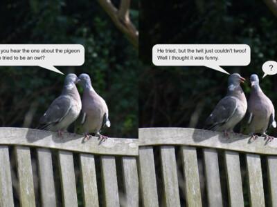 Pigeon-Joke.jpg