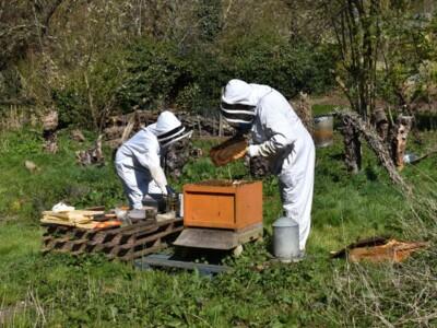 Bee-blog3.jpg