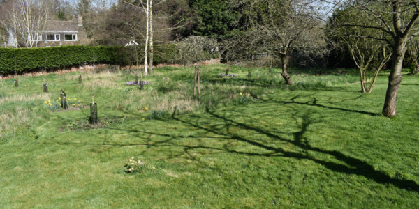 Orchard-2.jpg