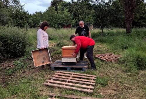 Beehive1.jpg