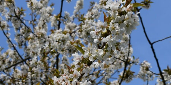 Blossom17.jpg