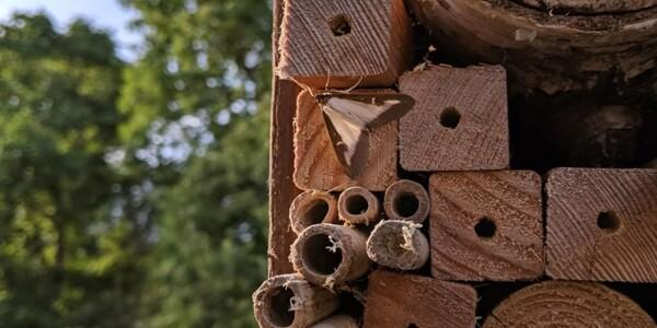 Box-Tree-Moth1.jpg