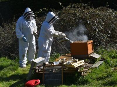 Bee-blog9.jpg