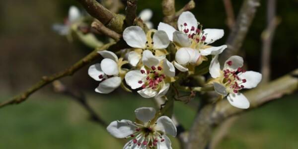 Blossom10.jpg