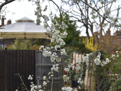 Orchard-21-2.jpg