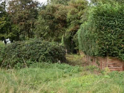 Cutting-Bramble-Hedge.jpg