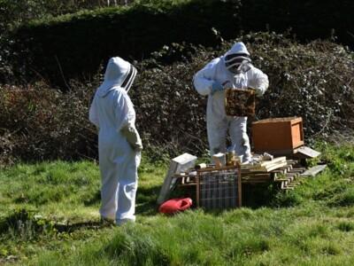 Bee-blog7.jpg