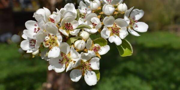 Blossom14.jpg