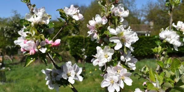 Blossom24.jpg