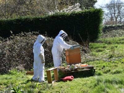 Bee-blog12.jpg