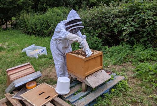 Beehive7.jpg