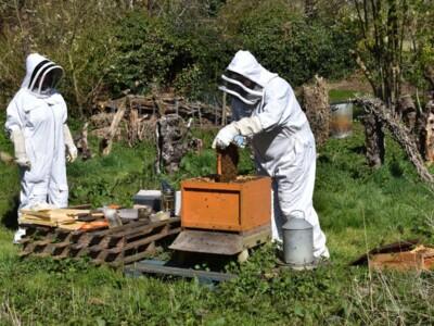Bee-blog4.jpg
