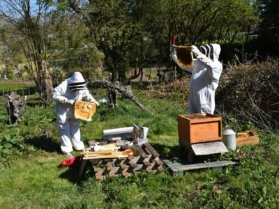 Bee-blog6.jpg