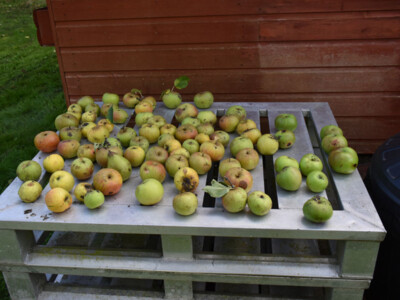 Fruit-Collecton.jpg