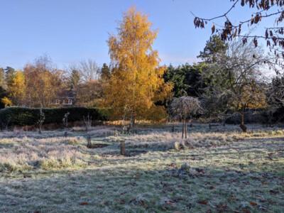 Frosty-Orchard1.jpg