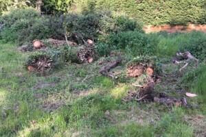Orchard-16th-May-8.jpg
