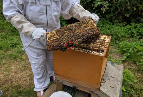 Beehive9.jpg