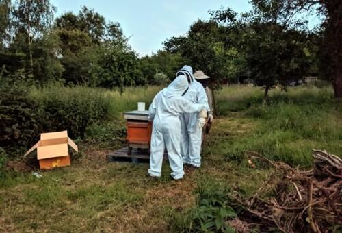 Beehive6.jpg
