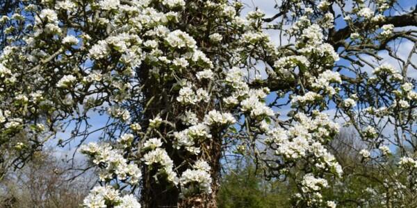Blossom23.jpg