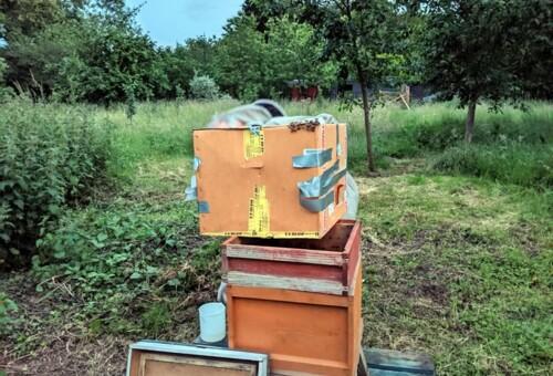 Beehive5a.jpg
