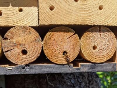 Bee-B&B2.jpg