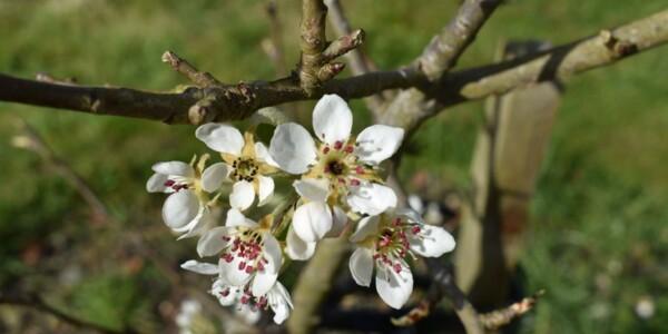 Blossom11.jpg