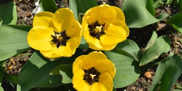 Blossom6.jpg