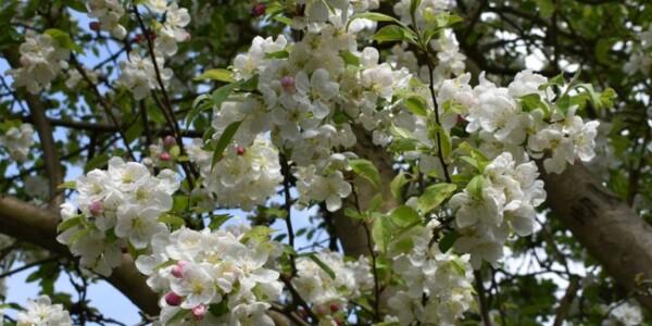 Blossom18.jpg